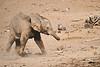 Elephants_Mashatu_2019_Botswana_0139