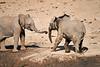 Elephants_Mashatu_2019_Botswana_0133