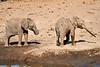 Elephants_Mashatu_2019_Botswana_0135