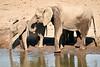 Elephants_Mashatu_2019_Botswana_0109