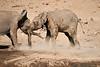 Elephants_Mashatu_2019_Botswana_0137
