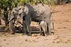Elephants_Mashatu_2019_Botswana_0126