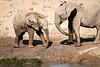 Elephants_Mashatu_2019_Botswana_0115
