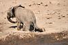 Elephants_Mashatu_2019_Botswana_0130