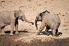 Elephants_Mashatu_2019_Botswana_0132
