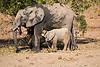 Elephants_Mashatu_2019_Botswana_0141