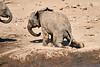 Elephants_Mashatu_2019_Botswana_0131