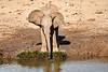 Elephants_Mashatu_2019_Botswana_0119