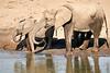 Elephants_Mashatu_2019_Botswana_0107