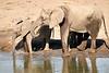 Elephants_Mashatu_2019_Botswana_0108