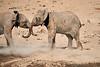 Elephants_Mashatu_2019_Botswana_0138