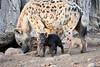 Happy_Hyena_Cub_Mashatu_2019_Botswana_0007
