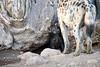 Spotted_Hyena_Cub_Mashatu_2019_Botswana_0016