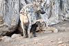 Spotted_Hyena_Cub_Mashatu_2019_Botswana_0025