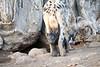 Spotted_Hyena_Cub_Mashatu_2019_Botswana_0022