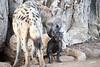 Spotted_Hyena_Cub_Mashatu_2019_Botswana_0021