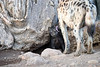 Spotted_Hyena_Cub_Mashatu_2019_Botswana_0015