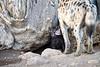Spotted_Hyena_Cub_Mashatu_2019_Botswana_0014