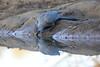 Go_Away_Bird_Mashatu_Botswanna__0001