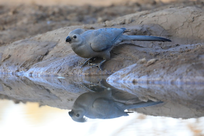 Go_Away_Bird_Mashatu_Botswanna__0007