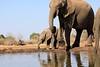 Elephant_Matebole_Hide_Botswanna__0077