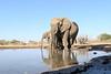 Elephant_Matebole_Hide_Botswanna__0167
