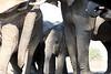 Elephant_Matebole_Hide_Botswanna__0073