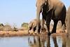 Elephant_Matebole_Hide_Botswanna__0076