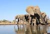 Elephant_Matebole_Hide_Botswanna__0165