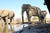 Elephant_Matebole_Hide_Botswanna__0169