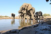Elephant_Matebole_Hide_Botswanna__0163