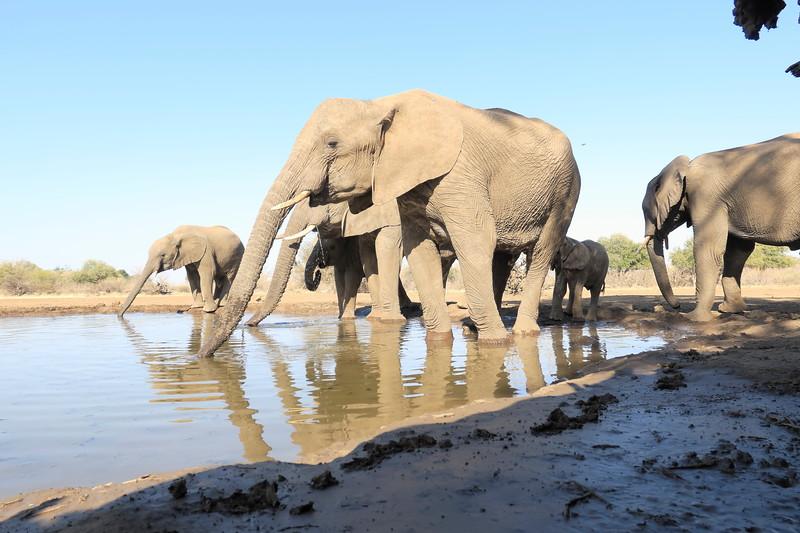 Elephant_Matebole_Hide_Botswanna__0162