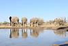 Elephant_Matebole_Hide_Botswanna__0171