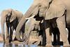 Elephant_Matebole_Hide_Botswanna__0082