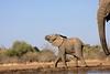 Elephant_Matebole_Hide_Botswanna__0080