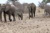 Elephant_Mashatu_Botswanna__0004