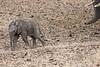 Elephant_Mashatu_Botswanna__0023