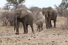 Elephant_Mashatu_Botswanna__0002
