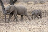 Elephant_Mashatu_Botswanna__0021