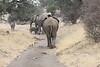 Elephant_Mashatu_Botswanna__0031