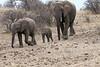 Elephant_Mashatu_Botswanna__0014