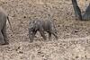 Elephant_Mashatu_Botswanna__0022