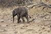 Elephant_Mashatu_Botswanna__0026