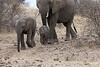 Elephant_Mashatu_Botswanna__0009