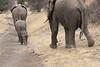 Elephant_Mashatu_Botswanna__0028