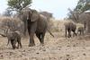 Elephant_Mashatu_Botswanna__0006
