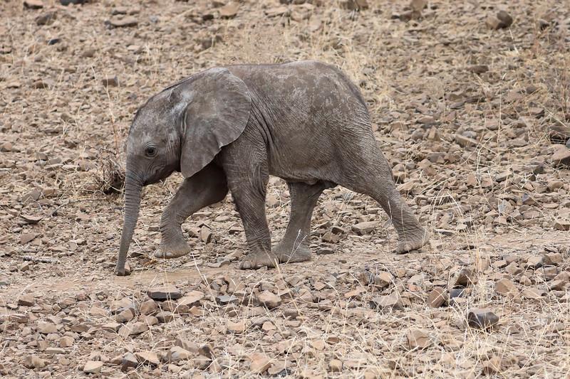 Elephant_Mashatu_Botswanna__0024