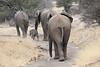 Elephant_Mashatu_Botswanna__0032