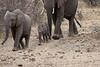 Elephant_Mashatu_Botswanna__0012