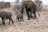 Elephant_Mashatu_Botswanna__0018